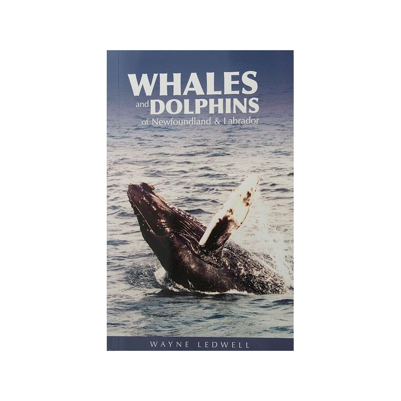 Whales and Dolphins of NL