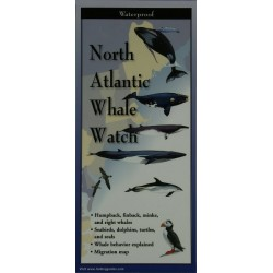 North Atlantic Whale Watch
