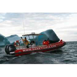Icebergs, Whales, & Wild Berries!