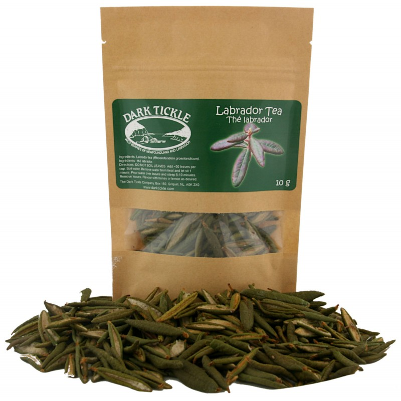 Labrador Tea Rhododendron groenlandicum