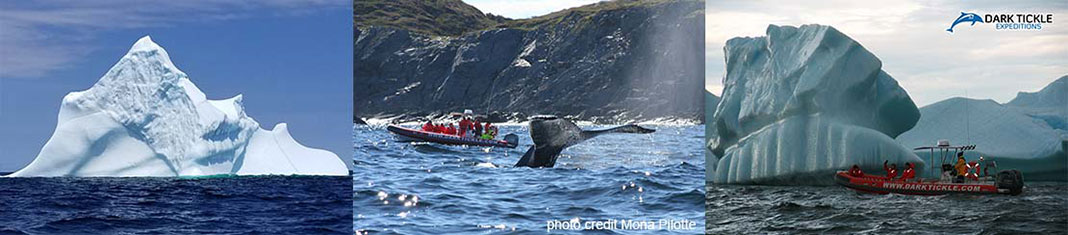 Dark Tickle Expeditions Icebergs, Whales & Wild Berries